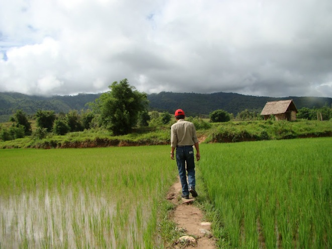 Manophet Rice Paddy