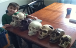 Some of the fossil casts I brought with me. Except the one on the left. That's a boy (my son, actually).